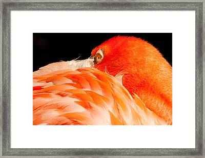 Beauty In Feathers Framed Print