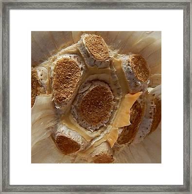 Beauty In Garlic Framed Print by Aliceann Carlton