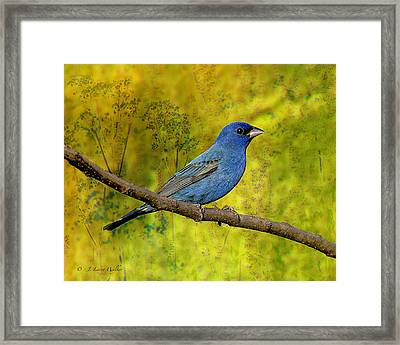 Framed Print featuring the digital art Beauty In Nature - Indigo Bunting by J Larry Walker