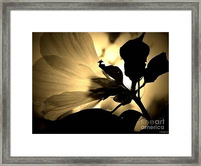 Beauty In Sepia Framed Print by Christy Ricafrente