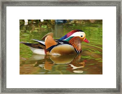 Beauty In The Pond Framed Print by Ayse Deniz