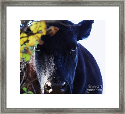 Beauty In The Woods Framed Print
