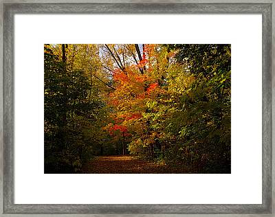 Beauty In The Woods Framed Print by Jocelyne Choquette