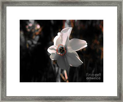 Framed Print featuring the photograph Beauty In The Woods by Sherman Perry