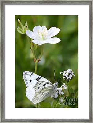 Beauty In White Framed Print