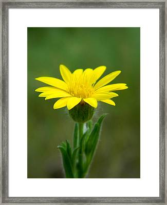Beauty In Yellow Framed Print by Ester  Rogers