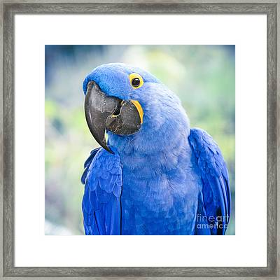 Beauty Is An Enchanted Soul Framed Print by Sharon Mau