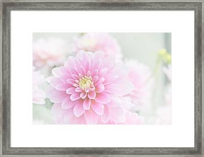 Beauty Iv Framed Print