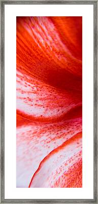 Beauty Of A Lily Framed Print by Kim Lagerhem