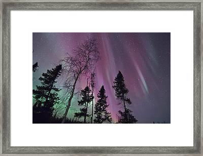 Beauty Of A Night Framed Print