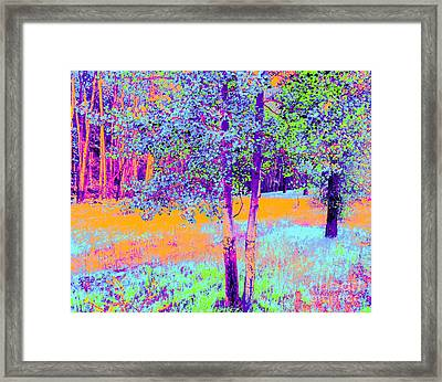 Beauty Of An Aspen Grove Framed Print by Ann Johndro-Collins