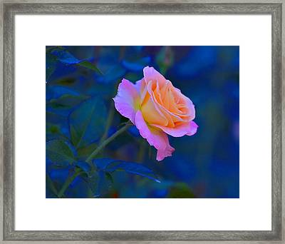 Flower 9 Framed Print