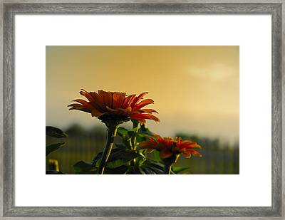 Beauty Of Nature Framed Print by Charles Beeler