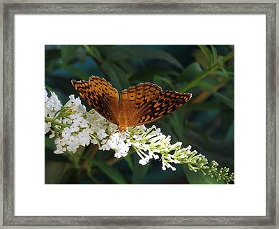 Beauty Of Nature Framed Print by James McAdams