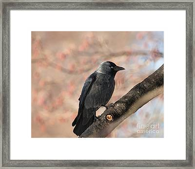 Framed Print featuring the photograph Beauty Of Nature by Rose-Maries Pictures