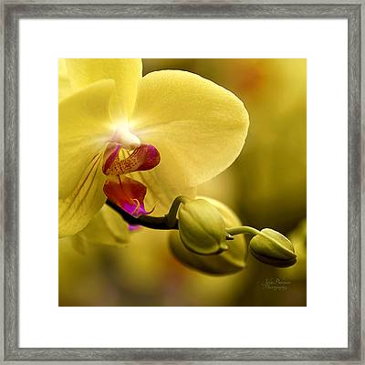 Beauty Of Orchids 2 Framed Print