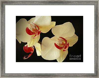 Beauty Of Orchids Framed Print