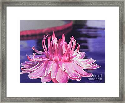 Beauty Of Pink At The Ny Botanical Gardens Framed Print by Chrisann Ellis