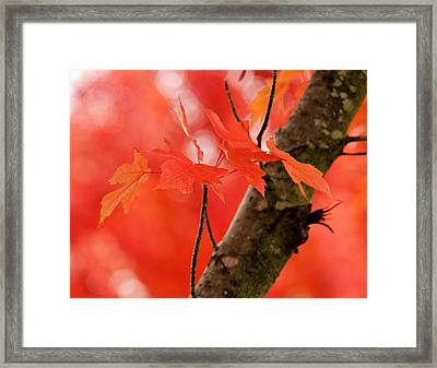 Framed Print featuring the photograph Beauty Of Red by Viviana  Nadowski