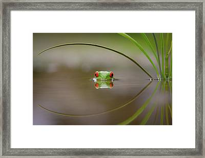 Beauty Of Reflection Framed Print