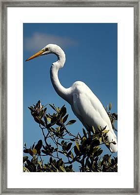 Beauty Of Sanibel Framed Print by Karen Wiles