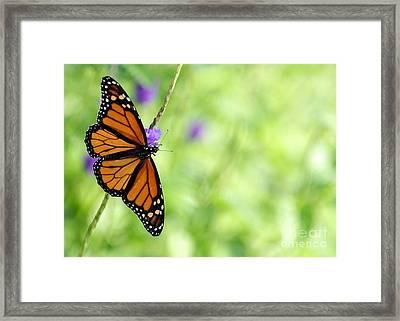 Beauty Of Spring Framed Print by Sabrina L Ryan