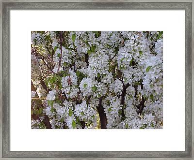 Beauty Of Spring Framed Print by Yvette Pichette