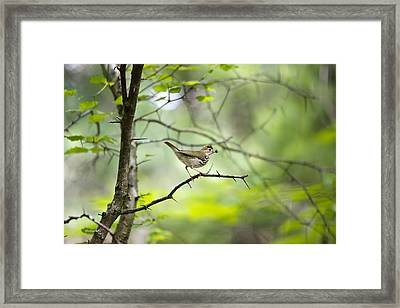 Beauty Of The Spring Forest Framed Print