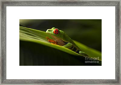 Beauty Of Tree Frogs Costa Rica 7 Framed Print