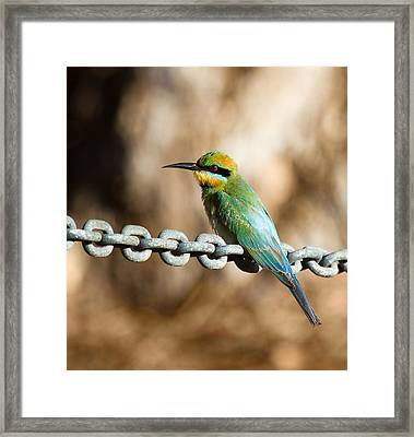 Beauty On Chains Framed Print