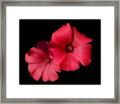 Beauty On The Black #1 Framed Print