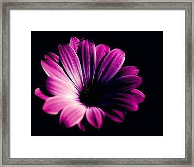 Beauty On The Black #2 Framed Print