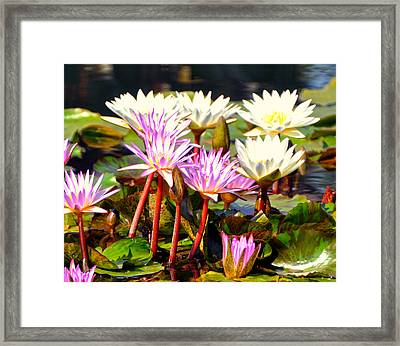 Framed Print featuring the photograph Beauty On The Water by Marty Koch