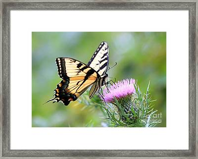 Beauty On Wings Framed Print