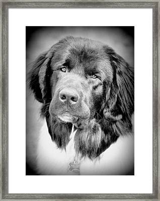 Beauty Pup Framed Print by Barbara Dudley