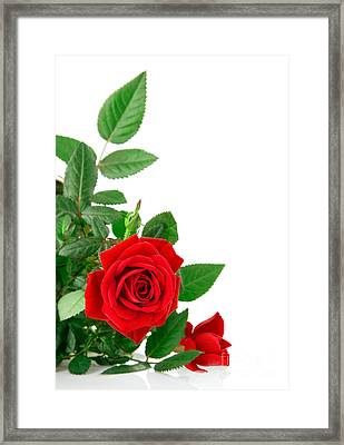 Beauty Red Roses Framed Print by Boon Mee