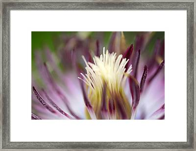 Beauty Remains Framed Print