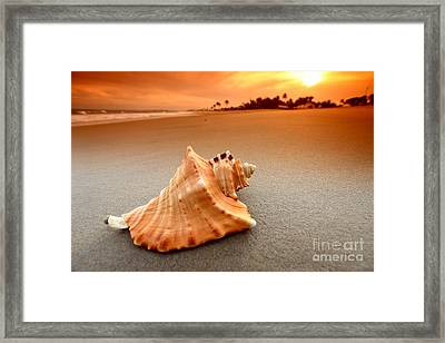 Beauty Shell Framed Print by Boon Mee