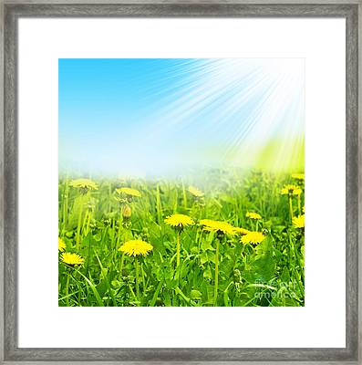 Beauty Summer Flowers Framed Print by Boon Mee