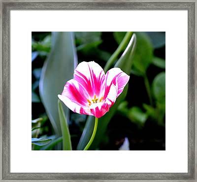 Beauty Framed Print by Tara Potts