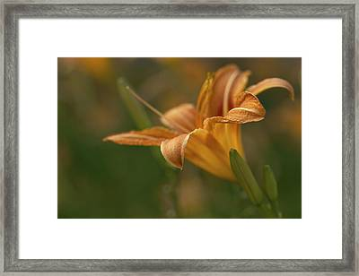 Beauty - Tiger Lily Art Print Framed Print by Jane Eleanor Nicholas