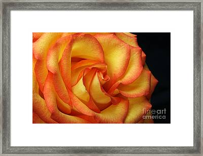 Beauty Unfolds Framed Print