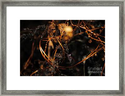 Framed Print featuring the photograph Rembrandt Lighting by Maja Sokolowska