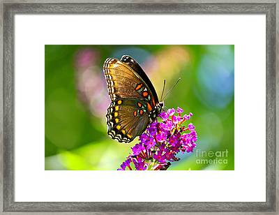Beautyfly Framed Print