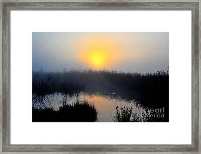 Beaver At Beaver Dam In Morning Framed Print by Dan Friend