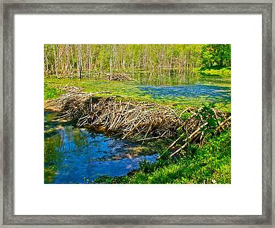 Beaver Lodge And Dam On Colbert Creek Along Rock Spring Trail In Natchez Trace Parkway-alabama Framed Print by Ruth Hager