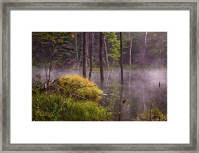 Framed Print featuring the photograph Beaver Lodge by Tom Singleton
