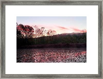 Beaver Marsh Framed Print by David Yunker
