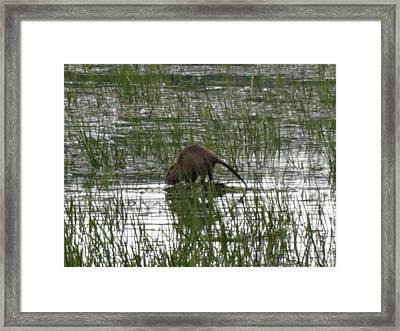 Beaver On The Work Framed Print by Lizbeth Bostrom