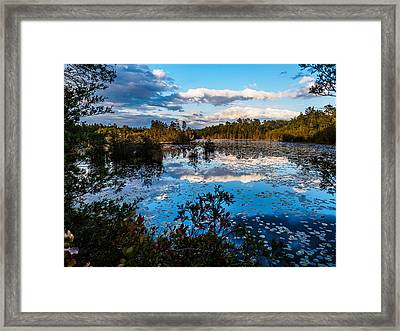 Beaver Pond - Pine Lands Nj Framed Print by Louis Dallara